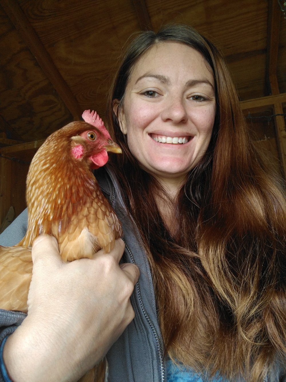 My chickens let me hold them when I bring them presents. J/K, you can see how annoyed Penny is with me for picking her up!