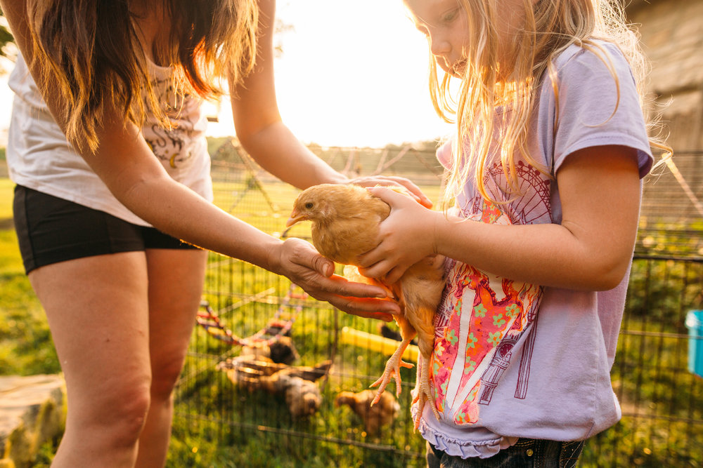 Photo credit to the talented  www.actnaturallyphotography.com  Aurora holding Piggy, one of the chicks she named.