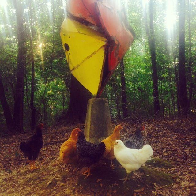 Col-o -Chick.jpg