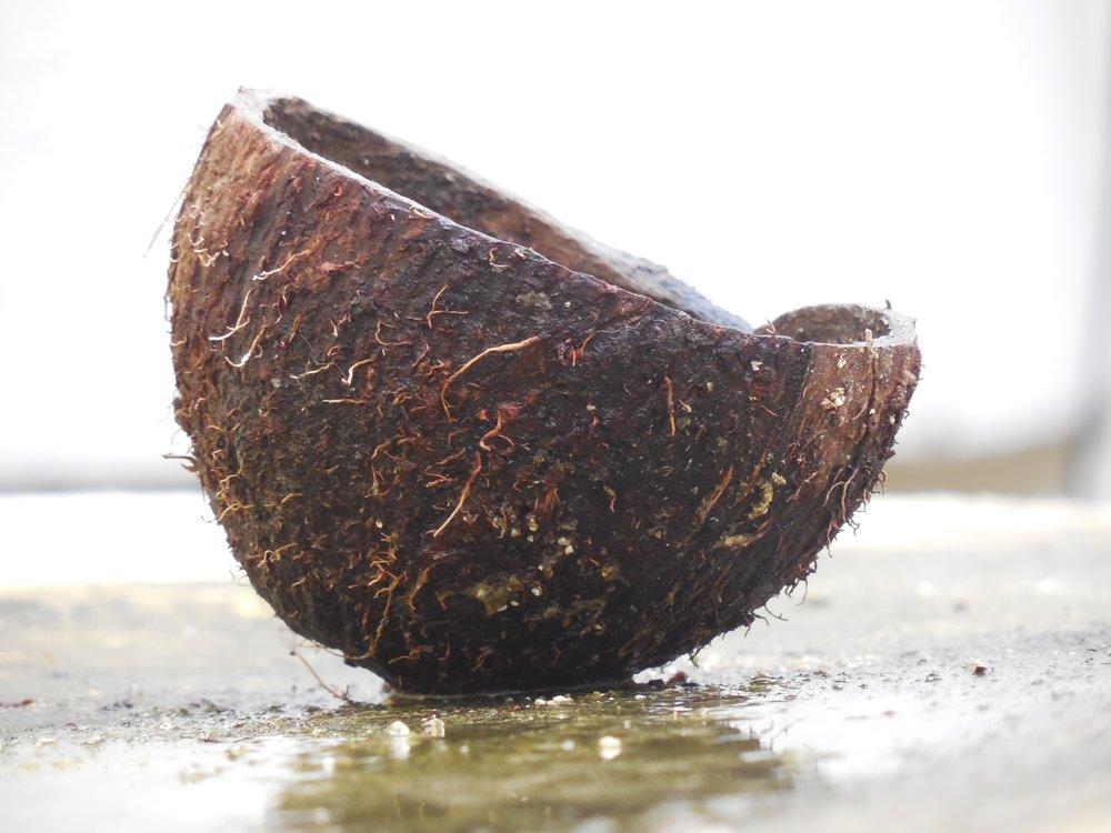 coconut cut in half wet