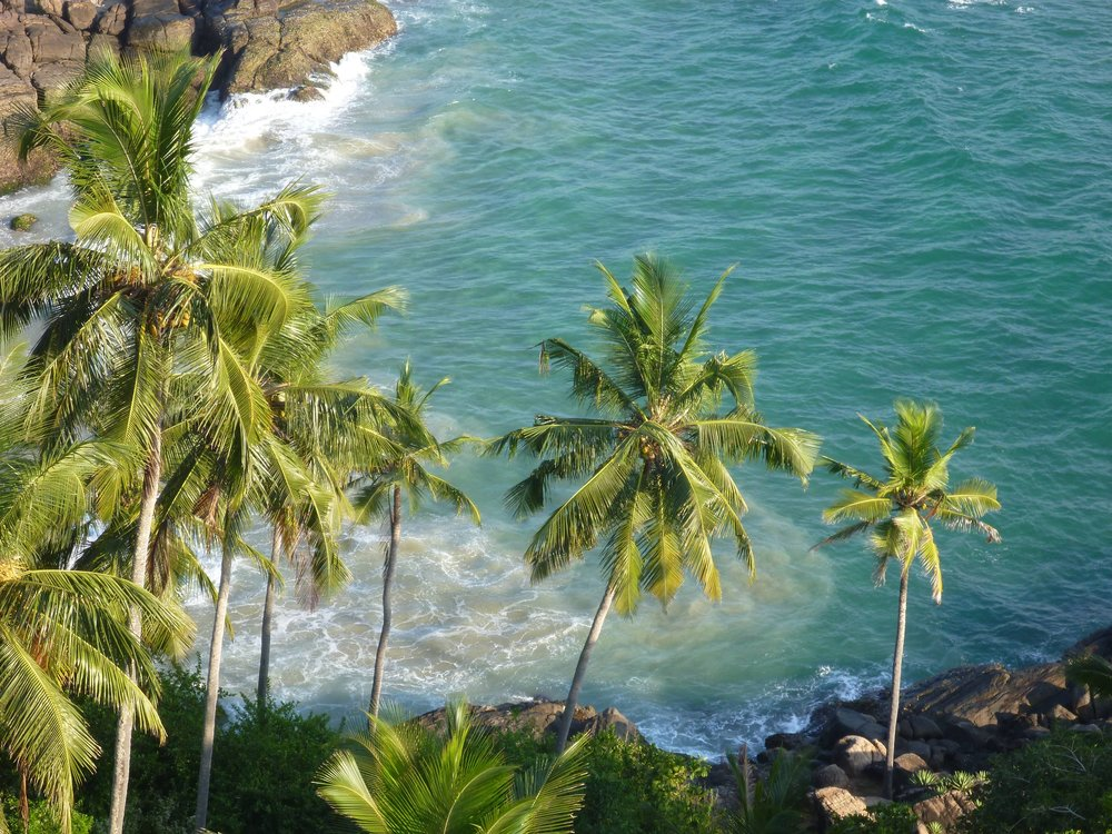 palm trees coconut CAcafe ocean