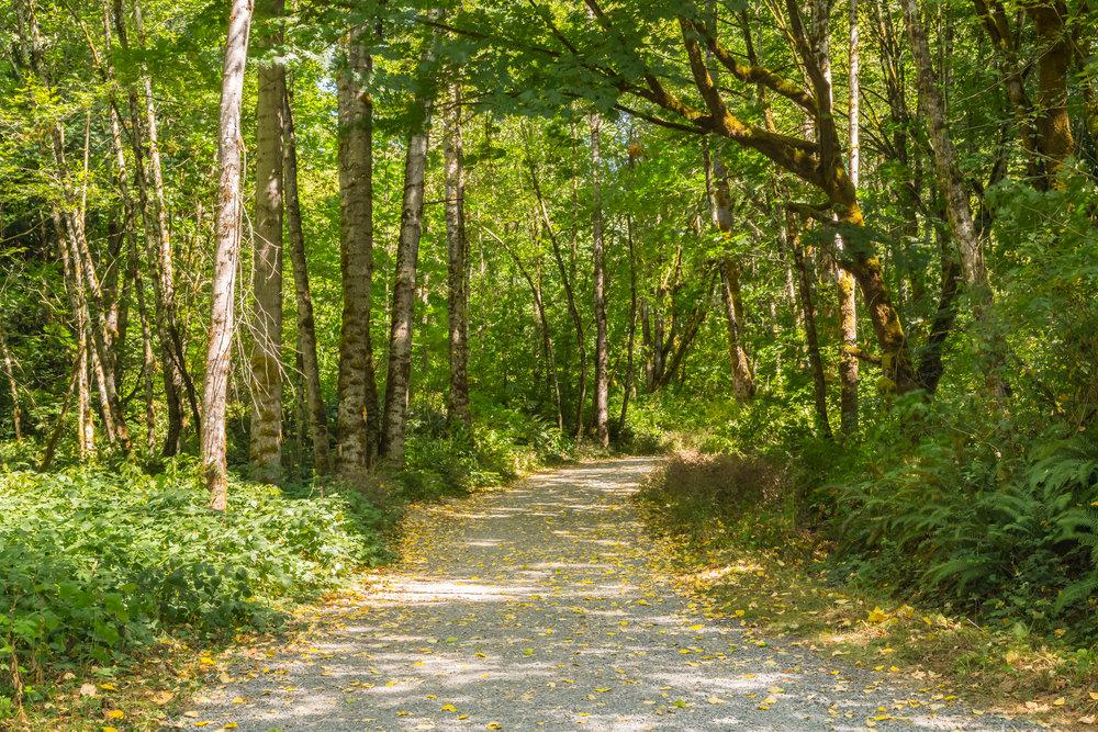 Cougar mtn trail.jpg