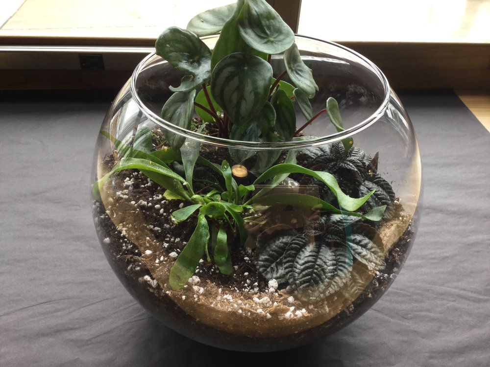 "12"" bubble bowl terrarium with (3) houseplants and rocks. $75 with tax"