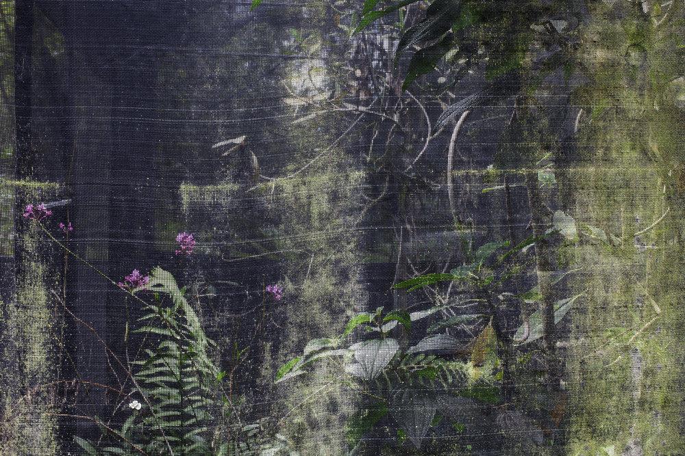 Enclosure, Wikiri Living Forest, Quito,Ecuador