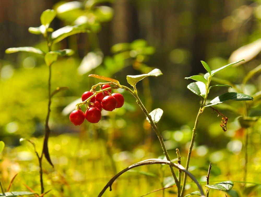 berry-71704_1280.jpg
