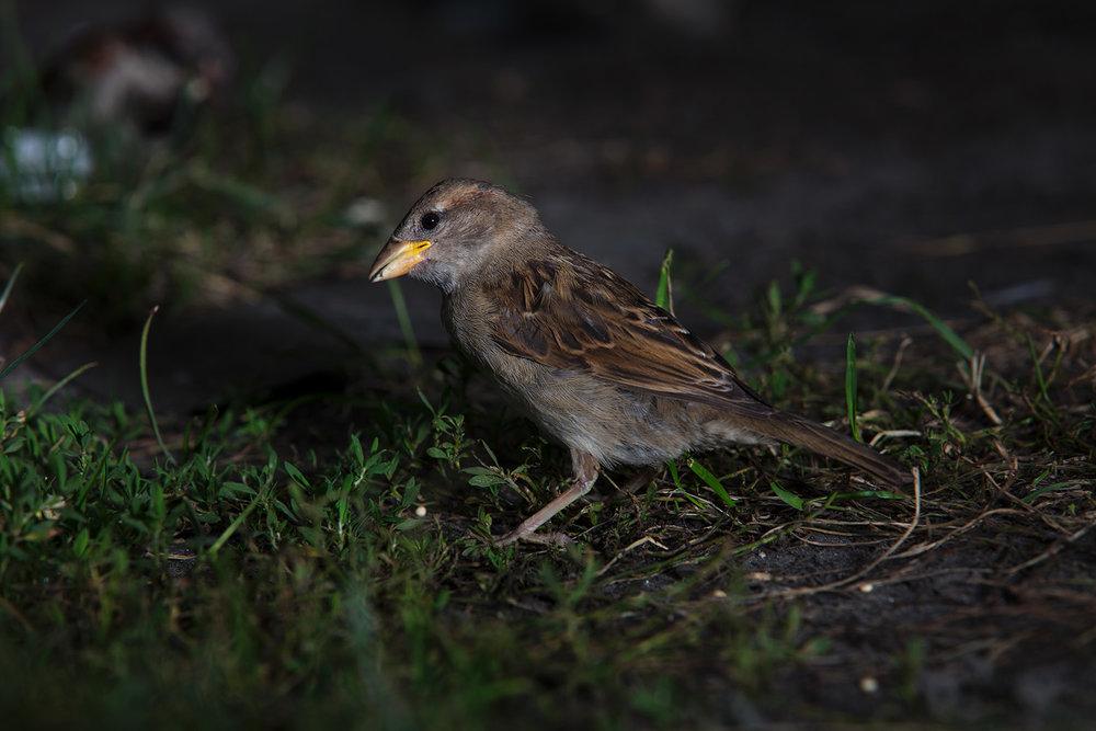 170813_birds_141.jpg