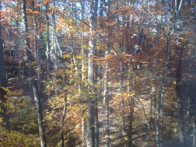 Carolina in fall is gorgeous: the view out my back window.