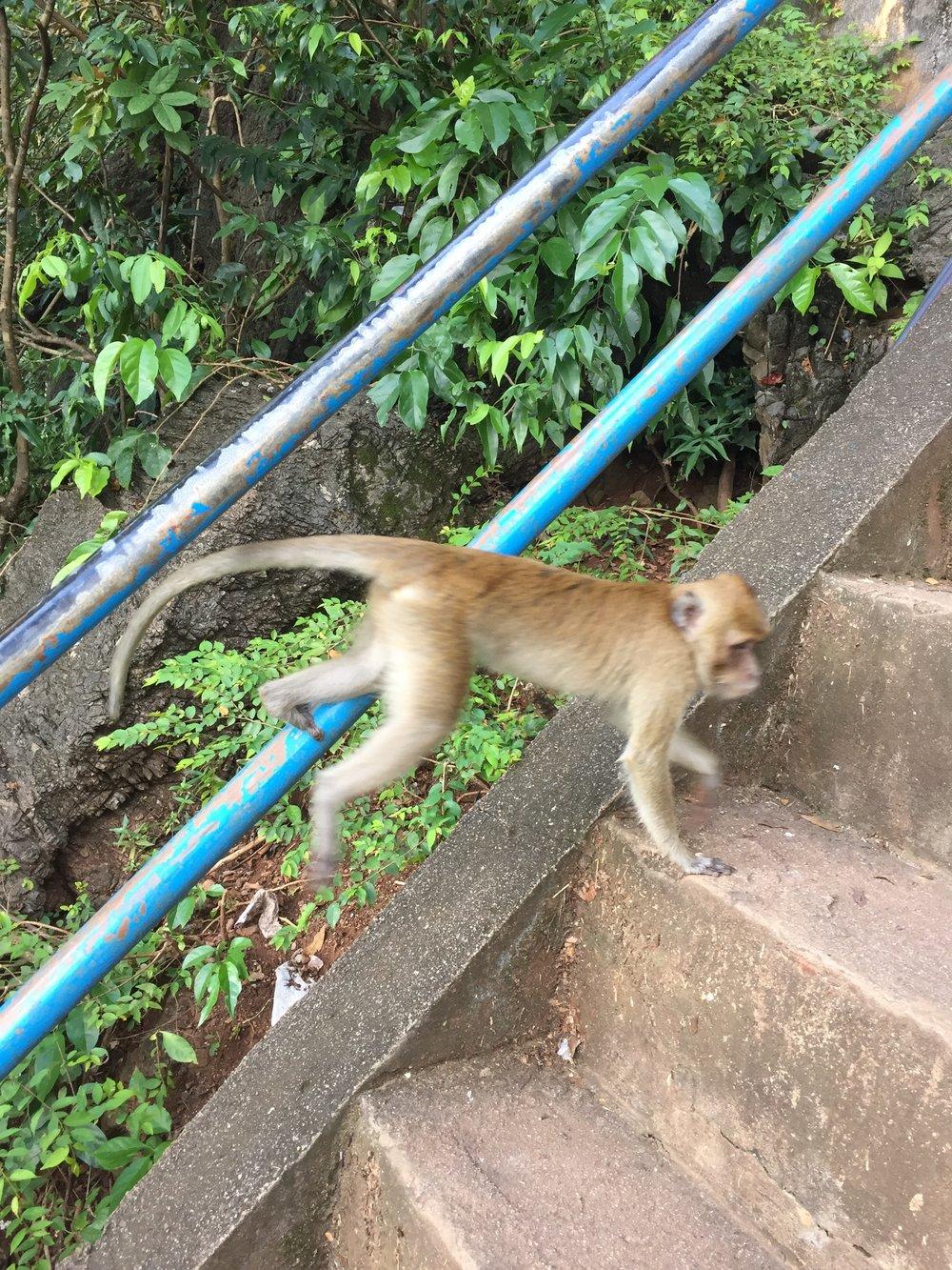 Krabi: Wat Tham Suea