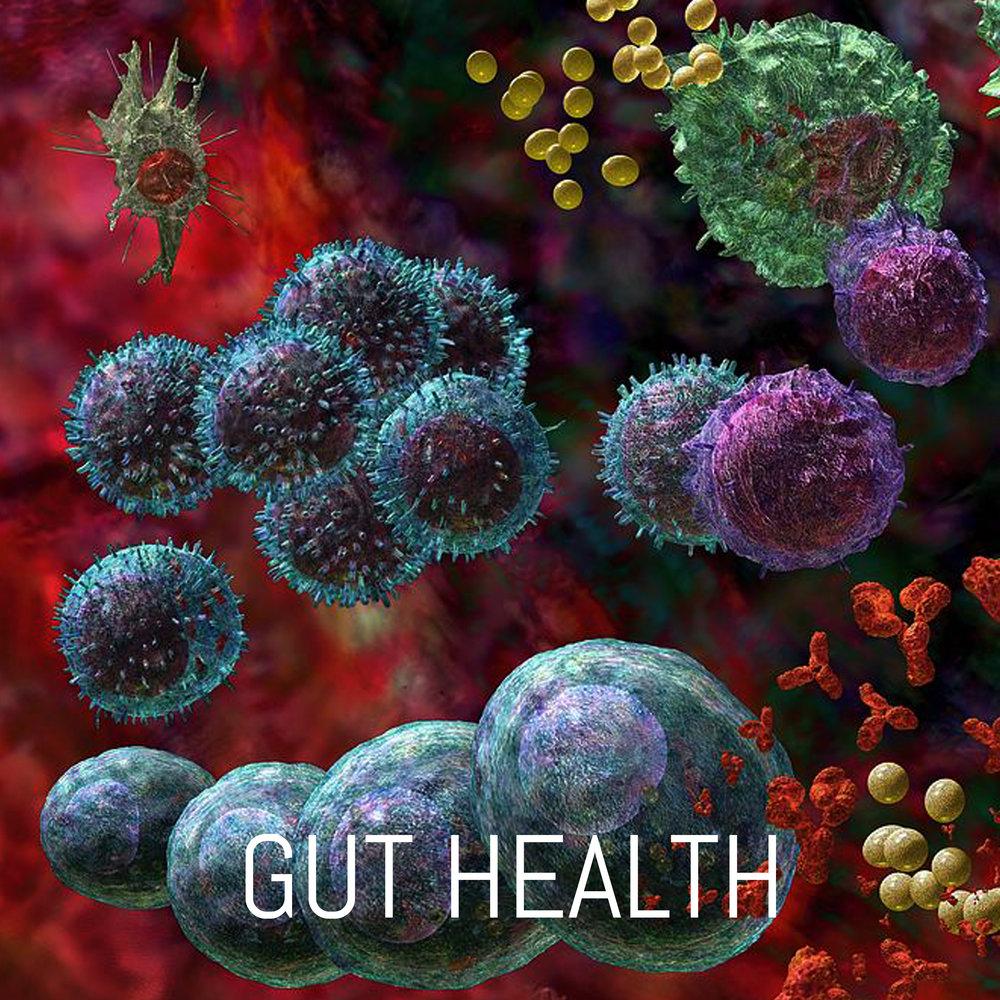 FH_buttons_GUT HEALTH.jpg