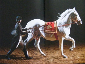 Lipizzaner - Spanish Riding School8.JPG