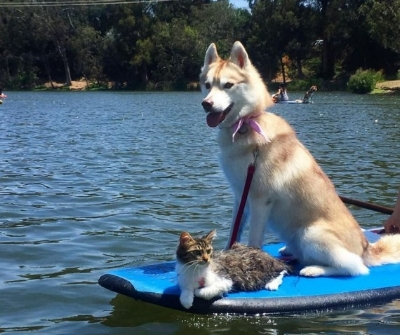 Lilo and Rosie kayaking on the water!