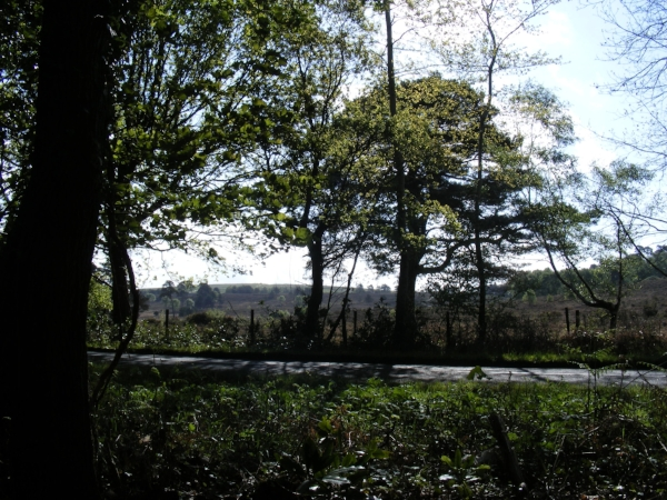 Nature drive