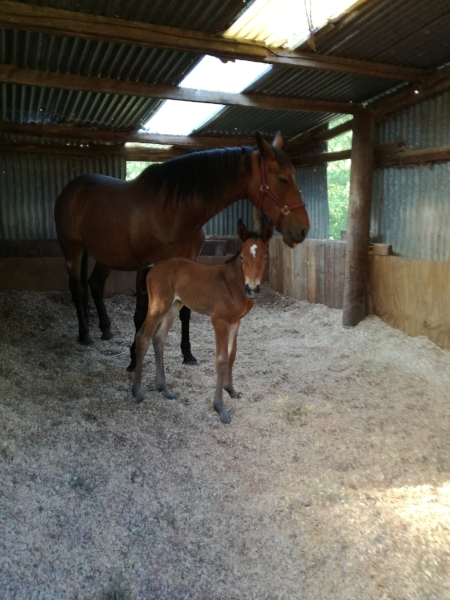 Mother and newborn filly