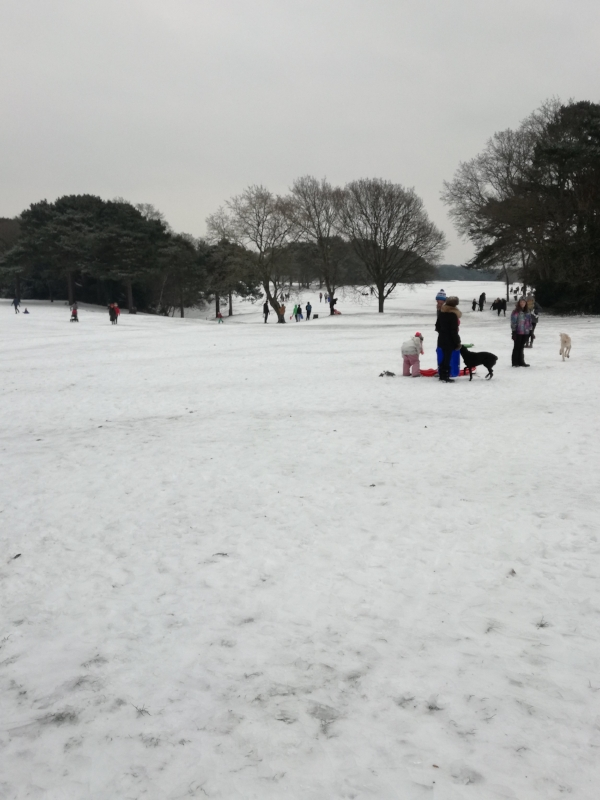 Part of the golf course, perfect for sledding!