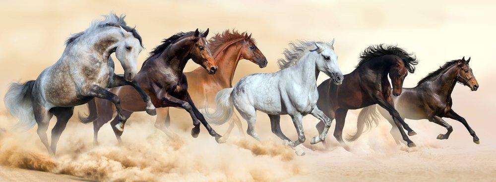 Horse herd running