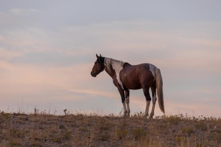 Wild horse in desert
