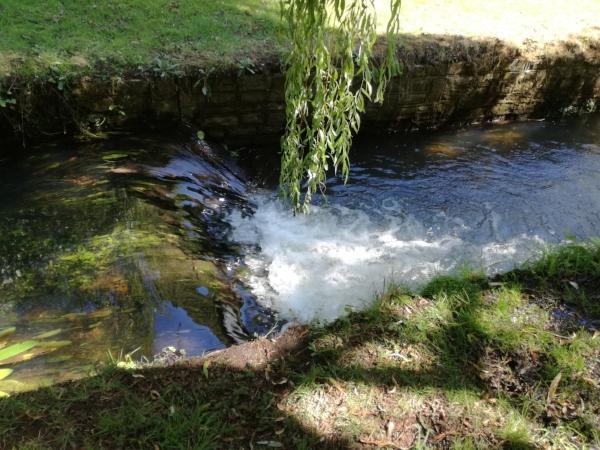 Stream in town gardens