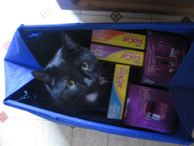Kipaku's idea of helping me unpack the grocery shopping!