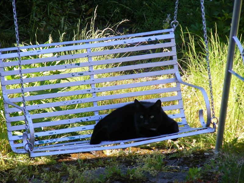 Comfy on the garden swing