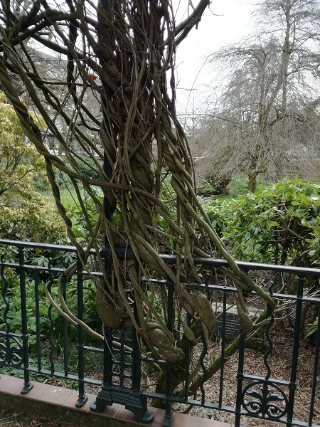 Branches twisted around railing