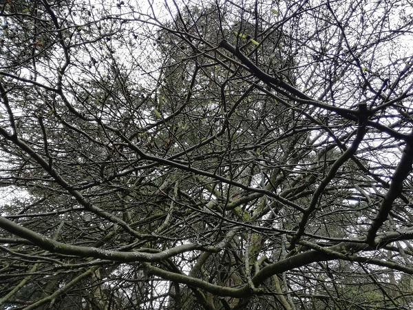 Barren branches overhead