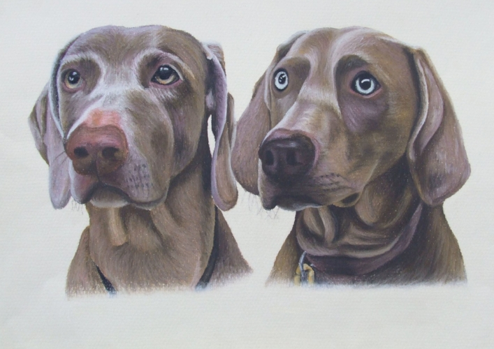 Bracken and Marnie - Weimaraners - A3 - Soft pastels