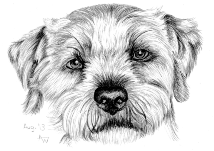 "Shaggy dog - 5"" x 7"" - Pencil sketch"