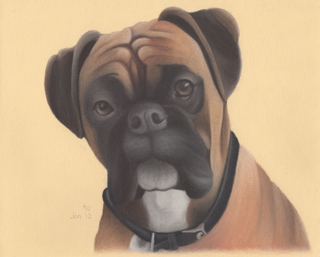 Tess - Boxer - 10inches x 8inches - Soft pastels