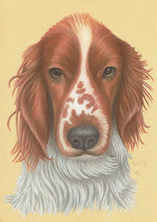 Barney - Welsh Spaniel - A3 - Soft Pastels
