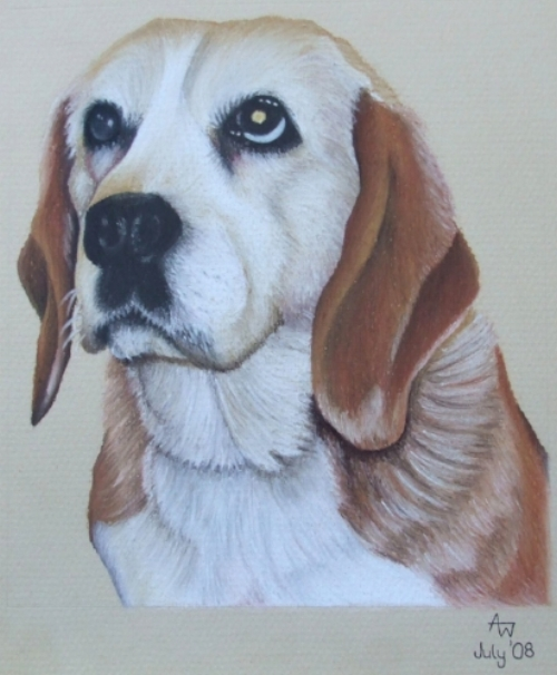 Bella - Beagle - 10inches x 8inches - Soft pastel