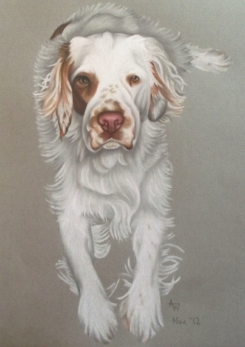 Buddy - Clumber Spaniel - 10inches x 12inches - Soft pastels
