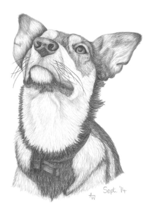 Collie Cross - A4 - Graphite Pencils