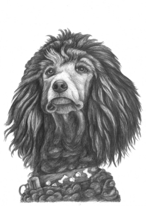 Suzi - Standard Poodle - A4 - Graphite Pencils