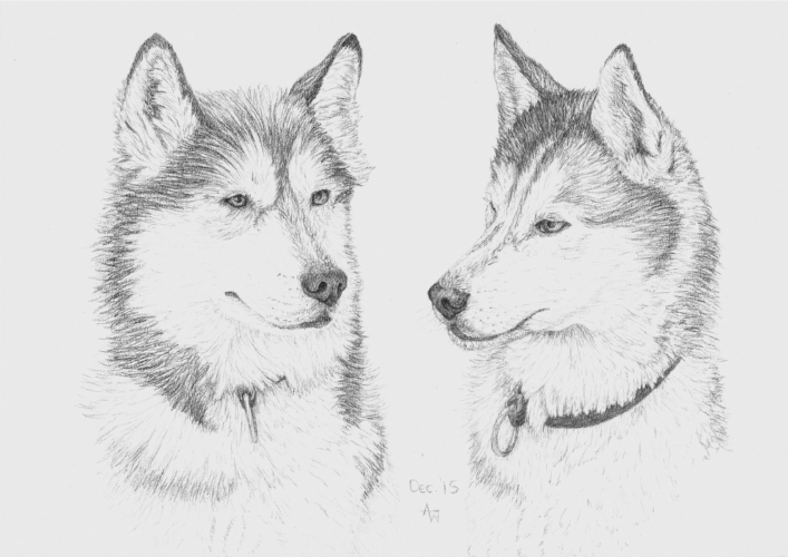 Huskies - A4 - Pencil sketch