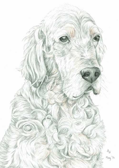 Harvey - A3 - Pencil and Inktense colour pencil sketch
