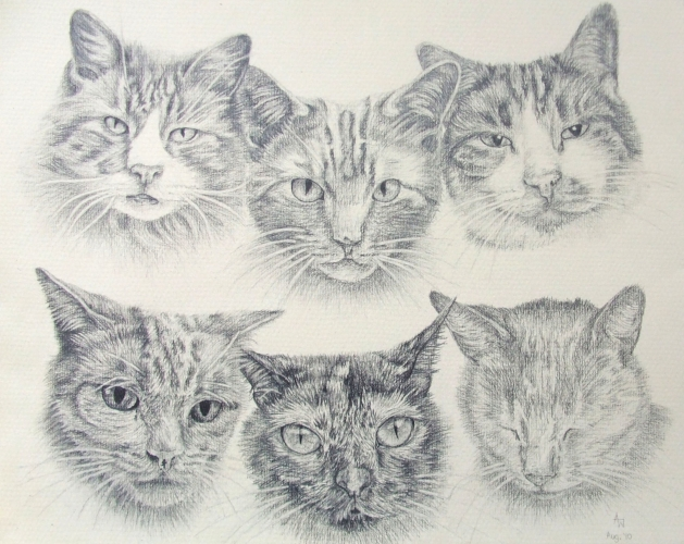 Family of cats - 11inches x 14inches - Pencil portrait