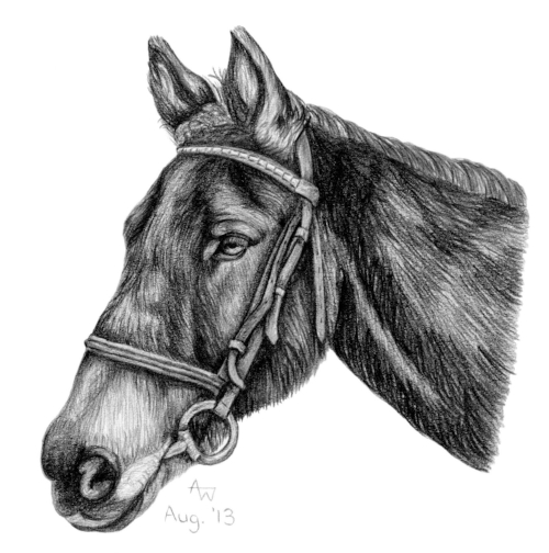 "Cracker - 6"" x 6"" - Pencil sketch - Special order birthday card"
