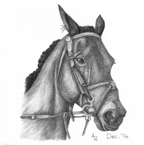 "Branston  - 6"" x 6"" - Pencil sketch - Special order birthday card"