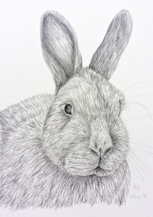Blue - Rabbit - A5- Graphite pencils