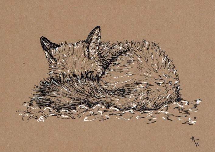 Sleepy Fox  greetings card - 5inches x 7inches - Black fine-liner directly on to the card