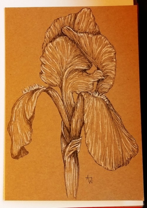 Iris  greetings card - 5inches x 7inches - Black fine-liner directly on to the card