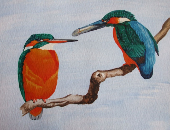 Kingfishers - A4 - Watercolour