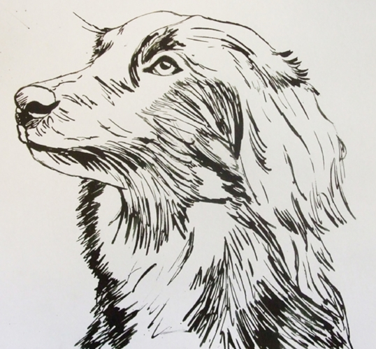 "Collie Cross - 10"" x 10"" - Ink sketch"