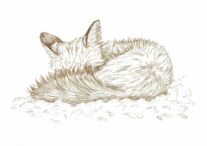 Fox - Pen Sketch