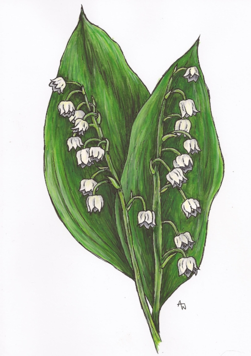 "Lilly of the Valley - 5"" x 7"" - Watercolour and inks. Specially commissioned"