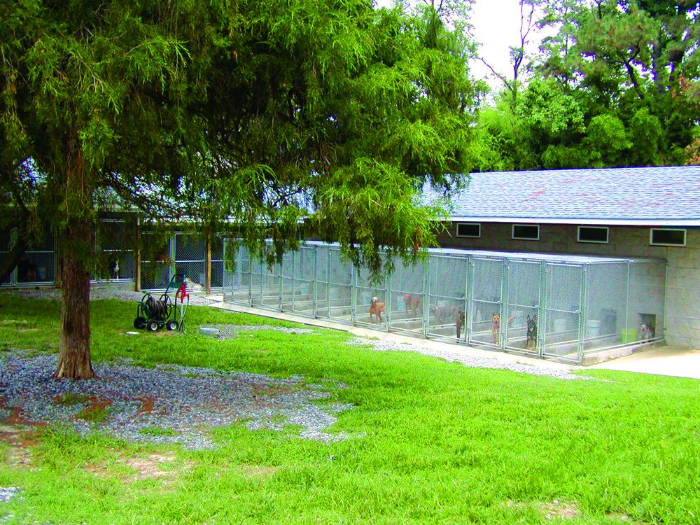 westyard-ddi-pic.jpg