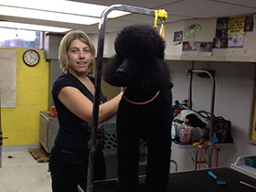 280x210-3-dogs-day-inn-va-grooming.jpg