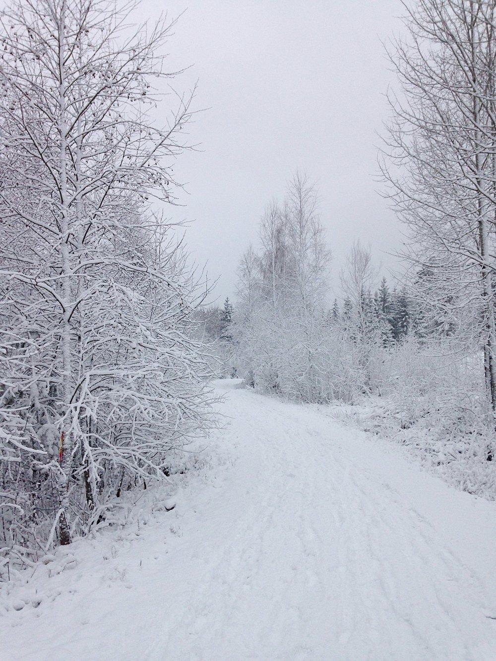Itsenäisyyspäivä Suomi100
