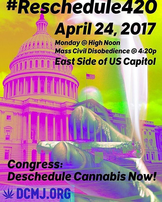 The anti-prohibition protests in #DC continue today! A smoke-in will be held at the Capitol Building at noon.  Bear in mind that this site is federal property and will leave protesters more vulnerable to arrest because despite #weed being legal in DC, it remains illegal on federal lands (including the monumental core and some parks). Eight people were arrested on DC land during protests on Thursday, and although charges were dropped against 6 of them, two remain up for charges based on the alleged weight of joints they had in their possession.  #I71 #endprohibition #cannabiscommunity #potprotests #potpolitics #marijuana