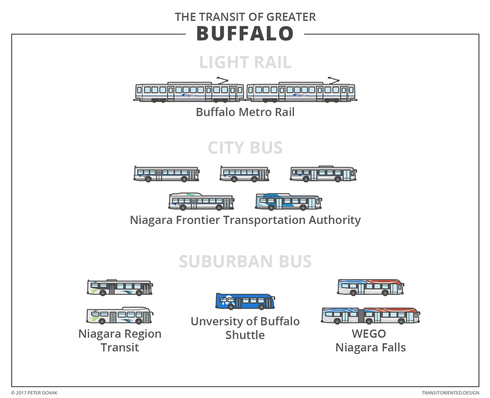 infographic-buffalo.png